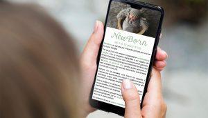 Perini brochure visualizzata su iPhone
